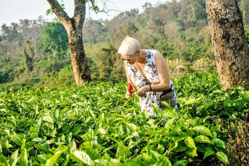 The Assam Tea Trail in India with MV Mahabaahu