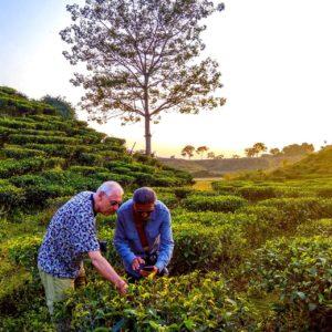 The Kaliabor Tea Plantation, Silghat