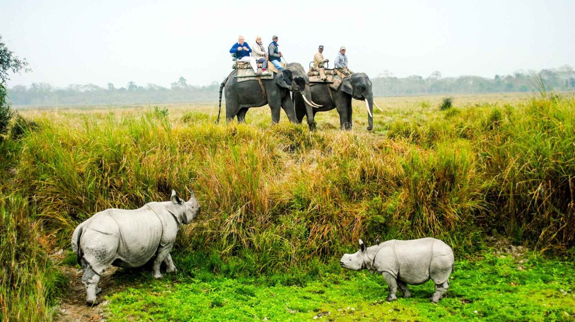 Elephant Safari Kaziranga Assam