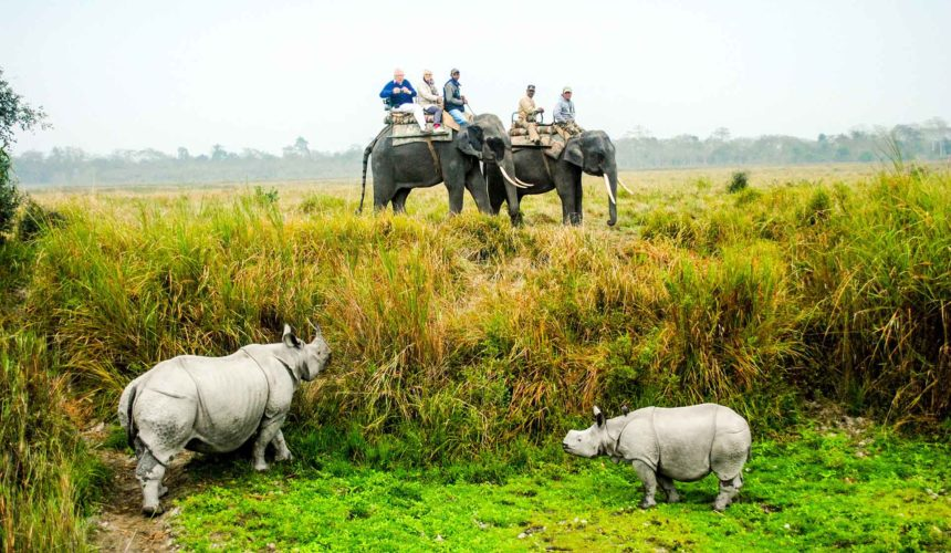 Five Amazing Experiences You Can Have In Assam