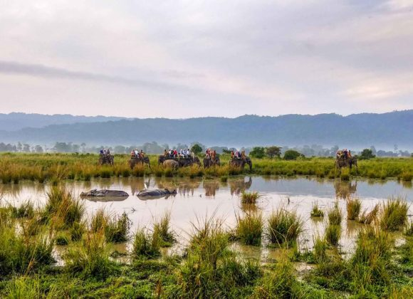 Elephant Safaris, Kaziranga National Park