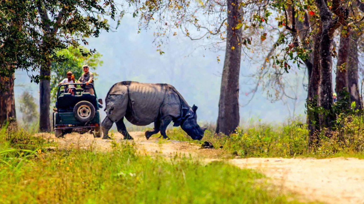 Jeep Safari Kaziranga Assam