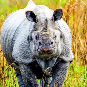 Kaziranga National Park: Land Of The Rhinos