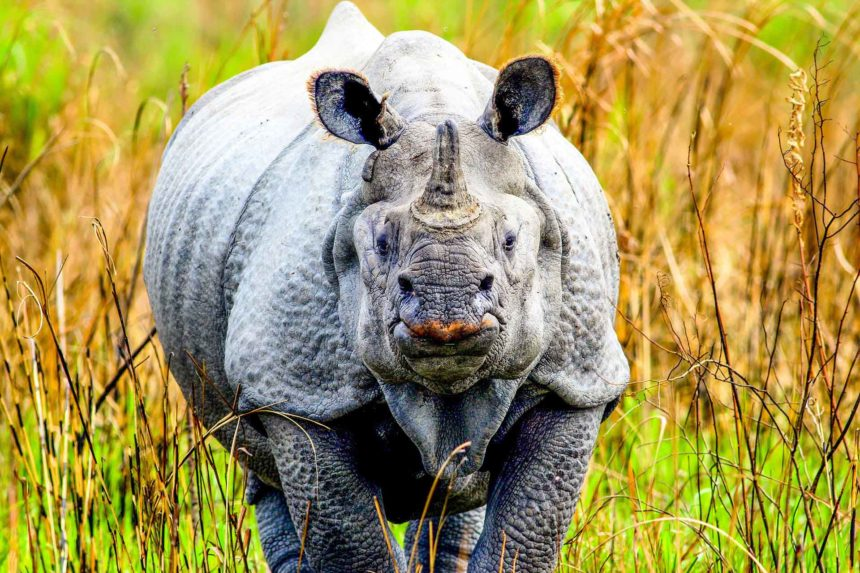 Kaziranga National Park: Land Of The Rhinos