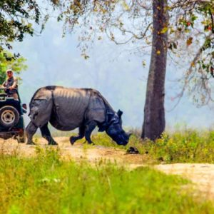 Jeep Safaris, Kaziranga National Park