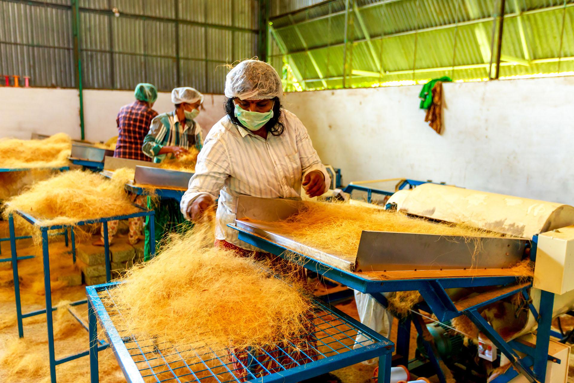 Coconut fibre processing in Chenganda Kerala