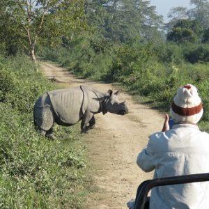 The One-Horned Rhino – The Pride Of Kaziranga