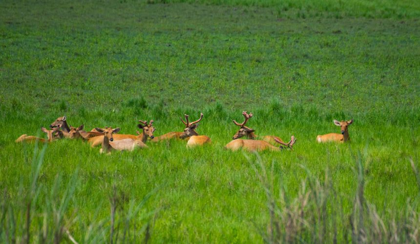 A voyage through Assam: cruising along India's Brahmaputra River